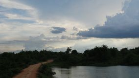 Фото от моего сафари живой природы Стоковые Фотографии RF