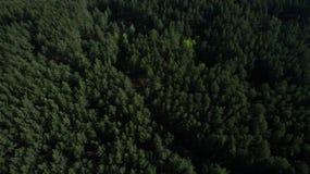 Фото от quadrocopter coniferous леса в лете стоковые фотографии rf