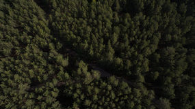 Фото от quadrocopter coniferous леса в лете Стоковые Фотографии RF