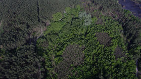 Фото от quadrocopter coniferous леса в лете стоковое изображение rf