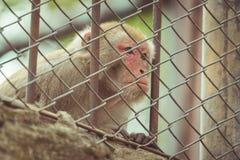 Фото одичалой милой обезьяны на зоопарке, год сбора винограда Стоковое Изображение RF