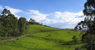 Фото панорамы ландшафта поля сельской местности зеленое с выгонами Стоковые Фото