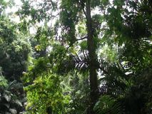 фото панорамы природы ландшафта острова palawan График зимы сток-видео