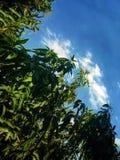 Фото пейзажа под небом стоковые изображения