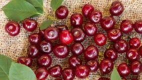 Фото показывает зрелые вишни Стоковое Фото