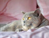 Кот интереса Стоковое фото RF