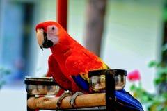 Фото попугаев Стоковое Изображение