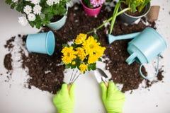 Фото почвы, моча чонсервной банкы, цветочного горшка, лопаткоулавливателя, грабл, рук в зеленых резиновых перчатках Стоковое фото RF