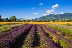 Фото поля лаванды в Assisi стоковое изображение