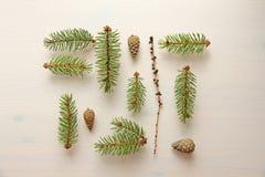 Фото принятое в лето Комплект элементов леса на плоской спине Стоковые Изображения