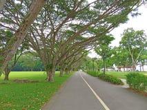 Фото принятое в Сингапур Парк Сингапур восточного побережья Стоковое фото RF