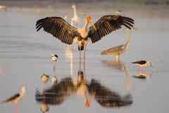Фото птицы Стоковое Изображение RF