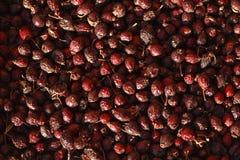 Фото плода шиповника, сухое dogrose Стоковое Изображение