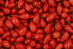 Фото плода шиповника, сухое dogrose Стоковая Фотография