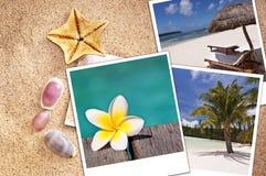 Фото пляжа немедленные на песке и seashells Стоковая Фотография