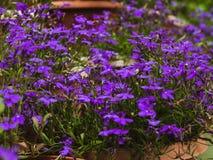 Фото растущего цветков в парке города стоковая фотография rf