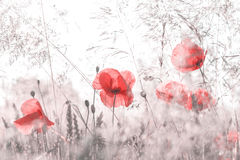 Фото ретро стиля desaturated луга лета Стоковое Изображение