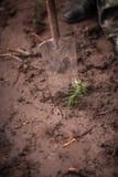 Фото ржавого лопаткоулавливателя выкапывая вне малый росток дерева Стоковые Фотографии RF