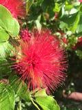 Фото розовой красочной одиночной предпосылки цветка сладостной внушительное Стоковые Фотографии RF