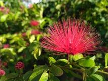Фото розовой красочной одиночной предпосылки цветка сладостной внушительное Стоковые Изображения RF