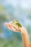 Фото руки женщины держа cuckooflower Стоковые Изображения RF