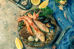 Фото рыб моря, креветки Стоковое Фото