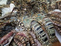 Фото свежих омаров и других морепродуктов стоковое фото