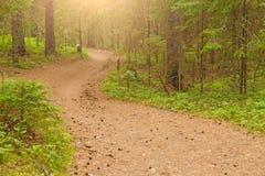 Фото сделанное в России Извилистая дорога с конусами в лете сосны Стоковые Фото