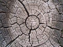 Фото сделанное в России Отрезок дерева в серых тонах, кольца дерева стоковые фотографии rf