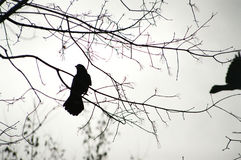 Фото силуэта птицы на ветви, конец-вверх Стоковое Изображение RF