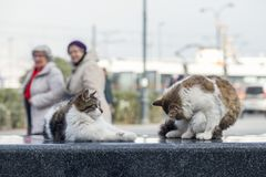 Фото случайного фотографа кота 2019 новое, милые коты улицы в улице стоковые изображения rf