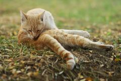 Фото случайного фотографа кота новое, милый желтый кот стоковая фотография