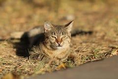 Фото случайного фотографа кота новое, небольшой кот тигра ослабляет стоковые фотографии rf