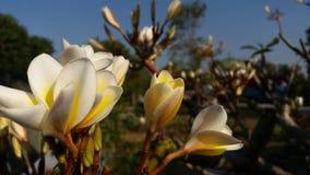 Фото смололо после цвести красный Lao стоковое изображение rf