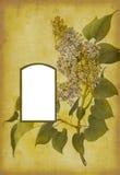 фото страницы альбома античное Стоковые Фото