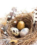 Фото с пасхальными яйцами гнездится и пер на белом backg студии Стоковое фото RF