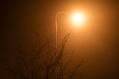 Фото уличного света светя от задних чуть-чуть завтрак-обедов дерева на ноче Стоковые Фото
