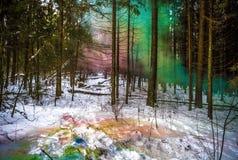 Фото фантазии леса зимы внешнее Стоковые Изображения RF