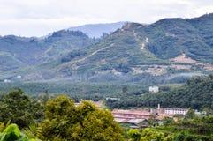 Фото фермы ладони в pahang jerantut, взгляд от istana bukit стоковое фото