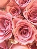 Фото цвета розового розового букета в цветени стоковые изображения rf