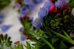 Фото цветков сада, голубых колоколов Стоковое Изображение RF