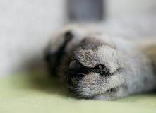 Фото части ноги котов, нога на красной предпосылке, художническое фото котов, играя кота, кот под подушкой, ногой котов Стоковое фото RF