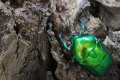 фото черепашки близкое зеленое вверх Стоковое Изображение