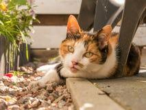Фото Cloadeup кота под стулом Стоковое фото RF