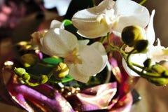 фото plasti показывая орхидею стоковое изображение rf