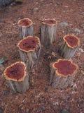 фото stumps вал Стоковые Фотографии RF