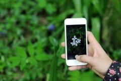 фото wildflower Стоковые Изображения RF