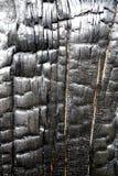 фрактали цветка конструкции карточки предпосылки белизна плаката ogange черной хорошая Стоковые Фото