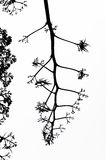 фракталь ветви иллюстрация вектора