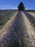 Франция Стоковые Фотографии RF